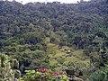 Morro Araponguinhas - R.Araponguinhas - Bairro dos Estados - Timbo - panoramio.jpg