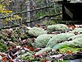 Moss covered roof Information Shed CCC Black Mountain Campground Pisgah Forest NC 4444 (37894609836).jpg