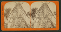 Mother of the Forest ; 305 feet high ; 63 feet circumference - near view, Calaveras County, by Lawrence & Houseworth 2.png