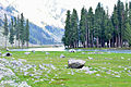 Moudant lake kalam velley Pakistan a heaven on earth.JPG