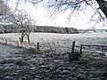 Muddy gateway, Newhouse. - geograph.org.uk - 97242.jpg