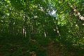 Národná prírodná rezervácia Stužica, Národný park Poloniny (23).jpg