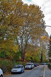 ND Hackinger Schlosspark 433 (01).jpg