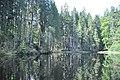 NPR Boubínský prales 20120910 04.jpg
