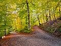 NSG Rotwildpark Stuttgart 2015 01 Waldweg Neuer See.jpg