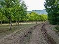 Nature, Oguz (P1090487).jpg