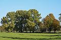 Nature reserve Moenchbruch - Naturschutzgebiet Mönchbruch - 02.jpg