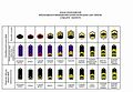 Navy ranks table OR of Ukraine 2016 (draft).jpg