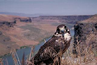 Morley Nelson Snake River Birds of Prey National Conservation Area
