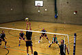 New Forest Volleyball Club.JPG