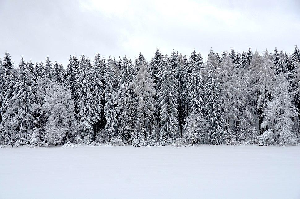 New snow, Swabian Alps (2019)