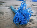 Newburgh, flotsam on the beach - geograph.org.uk - 1723559.jpg