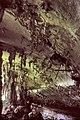 Niah cave.jpg