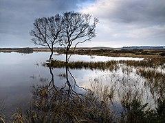 North end of Mochrum Loch.jpg