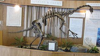 Nothronychus - Reconstructed N. graffami skeleton