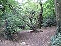 Oak Hill Wood.JPG