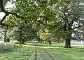 Oak lined avenue - geograph.org.uk - 1027162.jpg