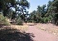 Oakoasis Grove - panoramio.jpg