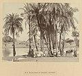 Oase met dadelpalmen in Karnak E 79. Het dorp Karnak (met dadelpalmen). Opper-Egypte (titel op object), RP-F-1997-28-14.jpg