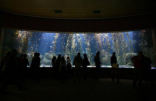 Oceanogràfic 15112008