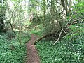 Offa's Dyke Path through Caswell Wood - geograph.org.uk - 167408.jpg