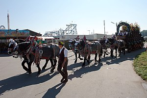 Teamster - Teamster driving a team of six horses at the Oktoberfest in Munich, Germany