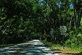 OldDNnRoad-TreeCanopy2-RideQuietly (39660907764).jpg