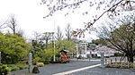 Omura park Sakura.JPG