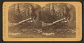 On the Oklawaha River, Fla, from Robert N. Dennis collection of stereoscopic views.png