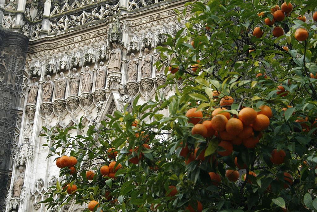 Orangesinsevilla.JPG