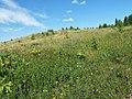 Osinskiy r-n, Permskiy kray, Russia - panoramio (50).jpg