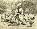 Ostrich farming in South Africa. Being an account of its origin and rise; how to set about it; the profits to be derived; how to manage the birds; the capital required; the diseases and difficulties (14748524511).jpg