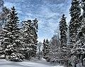 Ostrovsky District, Kostroma Oblast, Russia - panoramio - Andris Malygin (4).jpg