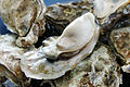 Oyster Ushimado02s.jpg