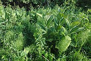Přírodní rezervace Skalské rašeliniště (05).jpg