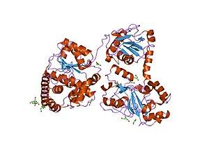 CO-methylating acetyl-CoA synthase - Monomeric Acetyl-CoA Synthase