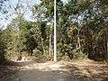 P 42 Lawachara National Park, In Moulovibajar, Bangladesh.jpg