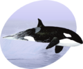 P Marine Mammals.png