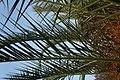 Palm 6 2013-07-10.jpg