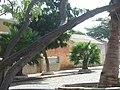 Palmeira - panoramio - brunobarbato (6).jpg