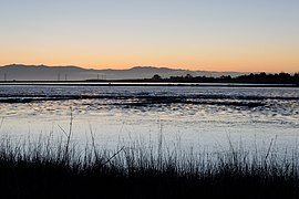 Palo Alto Baylands February 2013 003.jpg