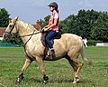 Palomino horse on Matching Green village green, Essex, England 3.jpg
