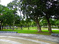 Paper-bark tea trees in Lin Sen Park 20101114.jpg
