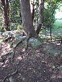 Parc-nature du Bois-de-l-ile-Bizard 81.jpg