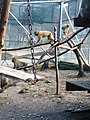 Parc animalier de Taza 11.jpg