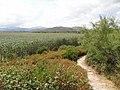 Parc natural de s'Albufera de Mallorca 10.jpg