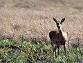 Parque Nacional da Serra da Canastra Ilse Klasing Sparovek (16).jpg