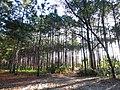Parque do Rio Vermelho - Reflorestamento 2.jpg
