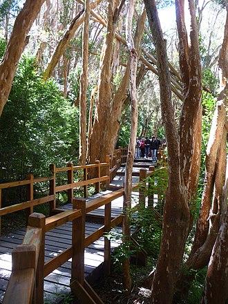 Los Arrayanes National Park - Image: Pasarela en bosque de arrayanes