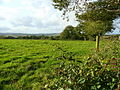 Pasture land near Petticombe Manor 1 - geograph.org.uk - 1009534.jpg